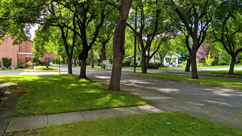 Millwood, Washington, Street Trees